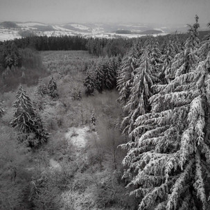 Forêt du Banquet