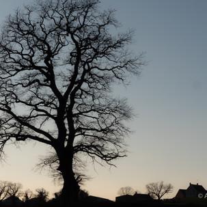 Le village de l'arbre
