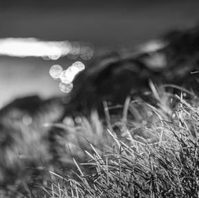 Noir et blancs-5.jpg