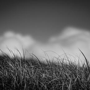 Noir et blancs-6.jpg