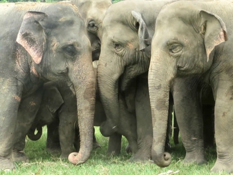 REALITY CHECK ON WORLD ELEPHANT DAY!