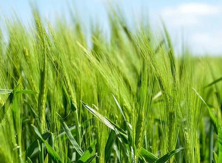 Agriculture : le gouvernement veut réduire les pesticides de 50% d'ici 2025