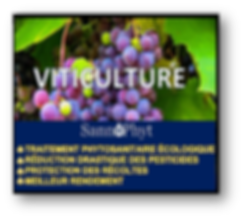 VITICULTURE PNG.png