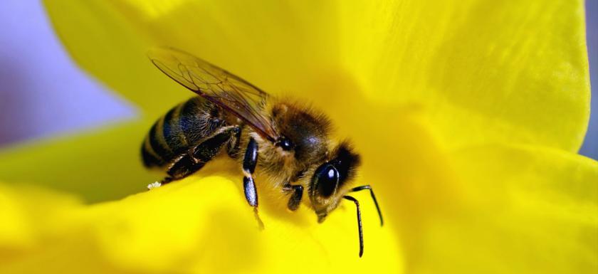 1200-bee