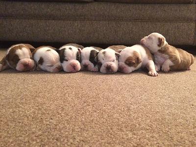 Pups grp.JPG