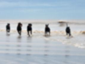 beach-moggs-eye-1-large.jpg