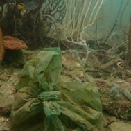 plastic under water.JPG