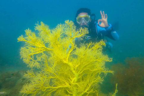 fan coral in langkawi