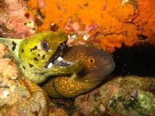 moray eels in langkawi