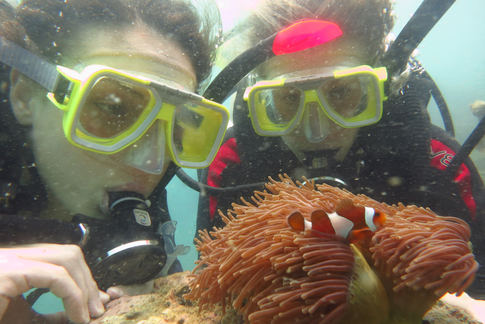 divers with clownfish