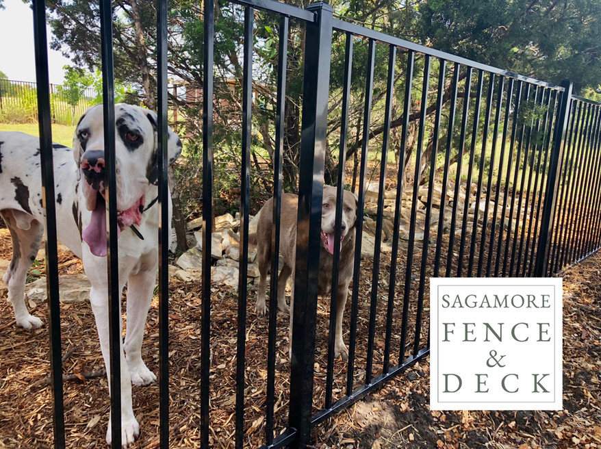 iron backyard dog fence