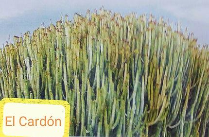 Cardon.jpg