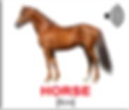 лошадь_.png