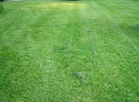 Natural Fertilizer: The Benefits of Grass Clippings