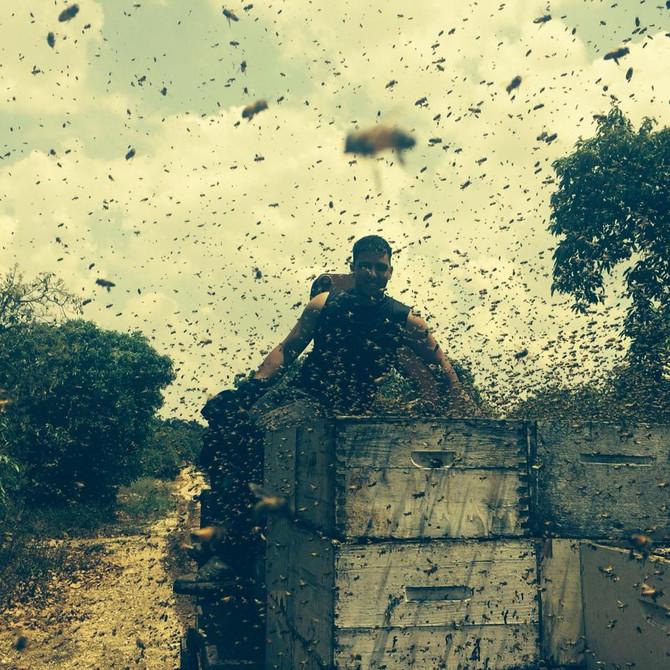 גידול דבורים-מדריך לחובב