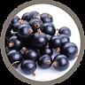 fruit_black currents.png