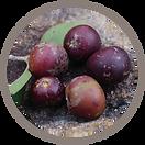 fruit_Nhunguru.png