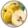 fruit_quince.png