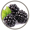 fruit_cab_sauv_cin_blackberry.png