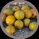 fruit_matunduru.png