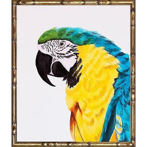 Parrot Bird Print|Framed Parrot|Gold Bamboo Frame|Giclee Print|Bestseller Parrot