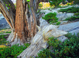 Tree and Wood