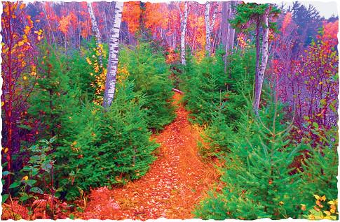 Crescent Lake Trail