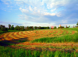 Artist's Hay Field