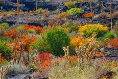 Desert Two