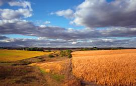 Plains #1