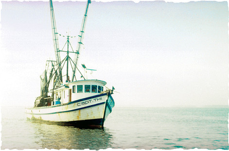 Shrimp Boats are Coming