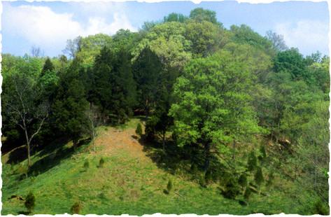 Hill Next to Carp Pond