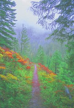 Rainy Day Trail