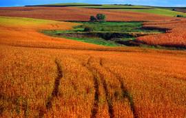 Plains #2