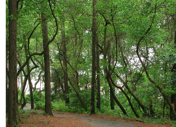 Path to the Nanticoke River