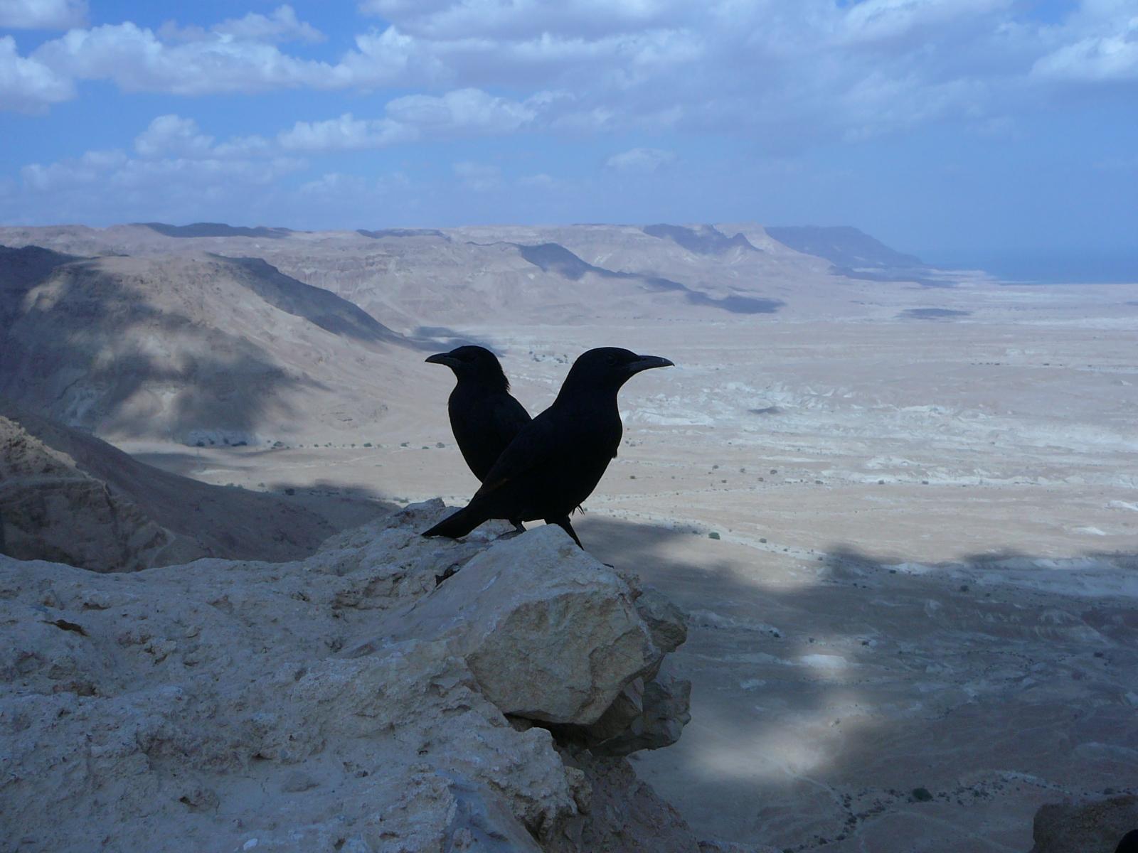Michel Sebban Gilboa guide en Israel