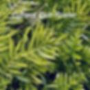 MbrContact(1)_edited.jpg