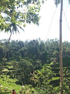 Jungle Swing_edited.jpg