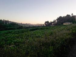 A peaceful morning, Sergude, Galicia