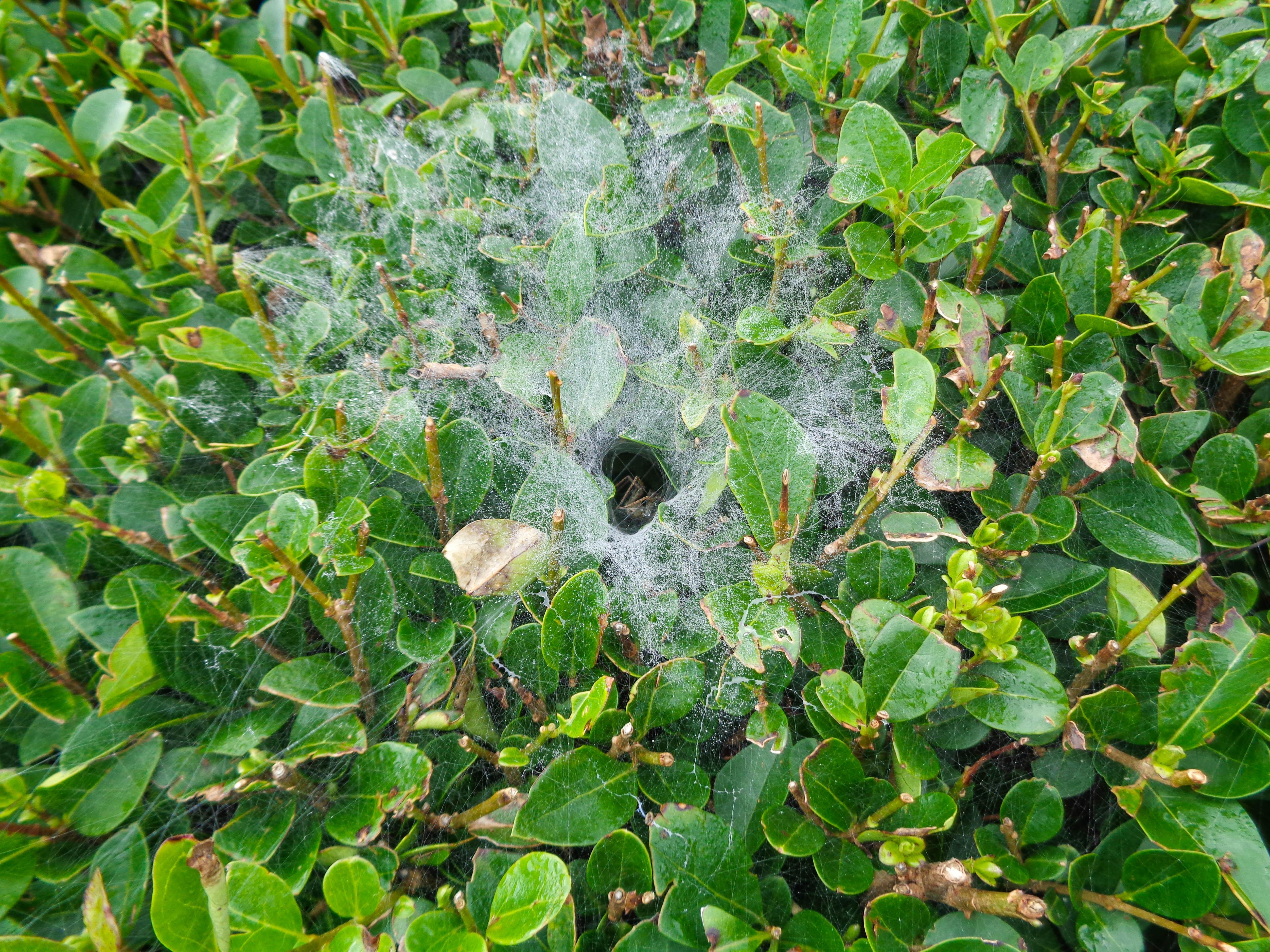 Dew-heavy web