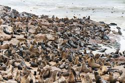 Cape Cross, Namibia
