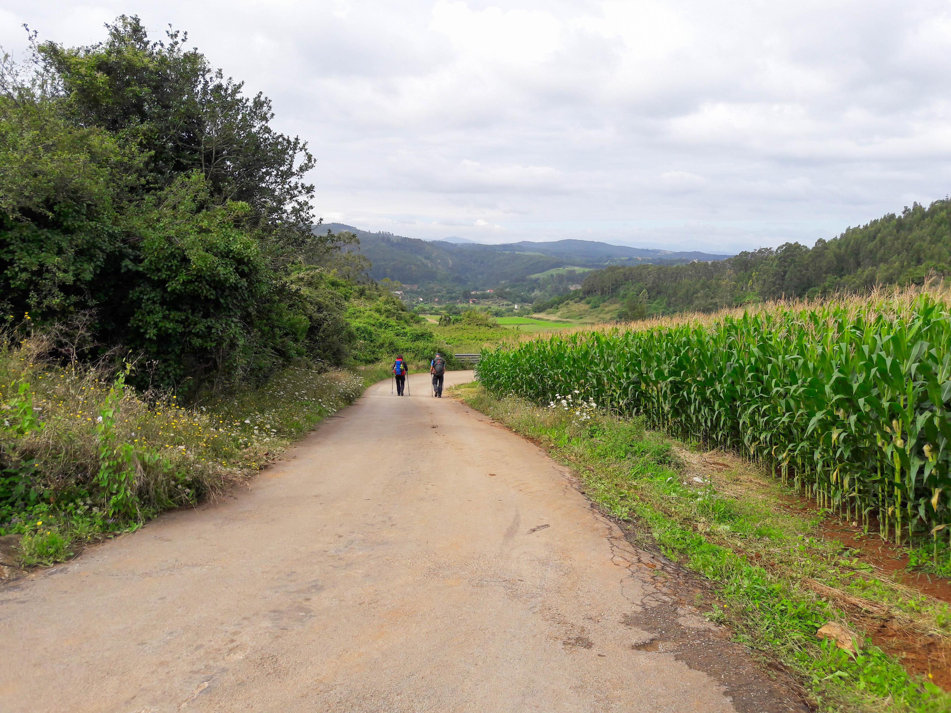 The road to San Martín de Cigüenza