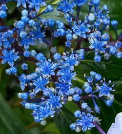 A beautiful bloom