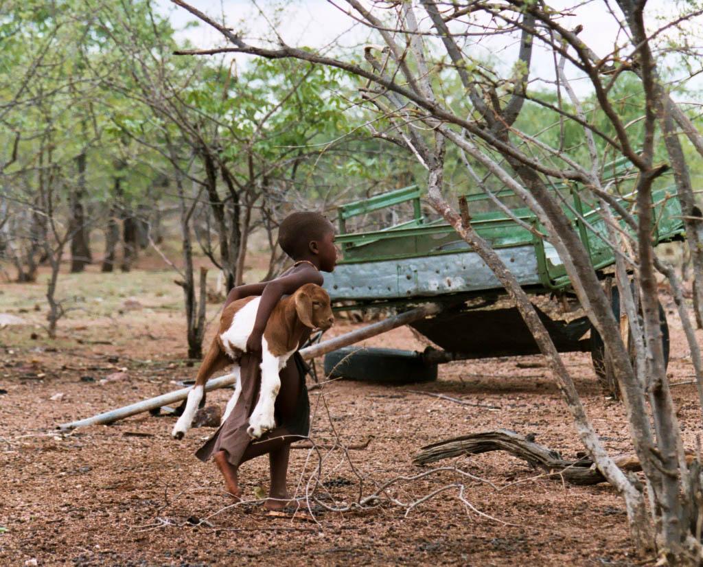 Himba boy with goat, Namibia