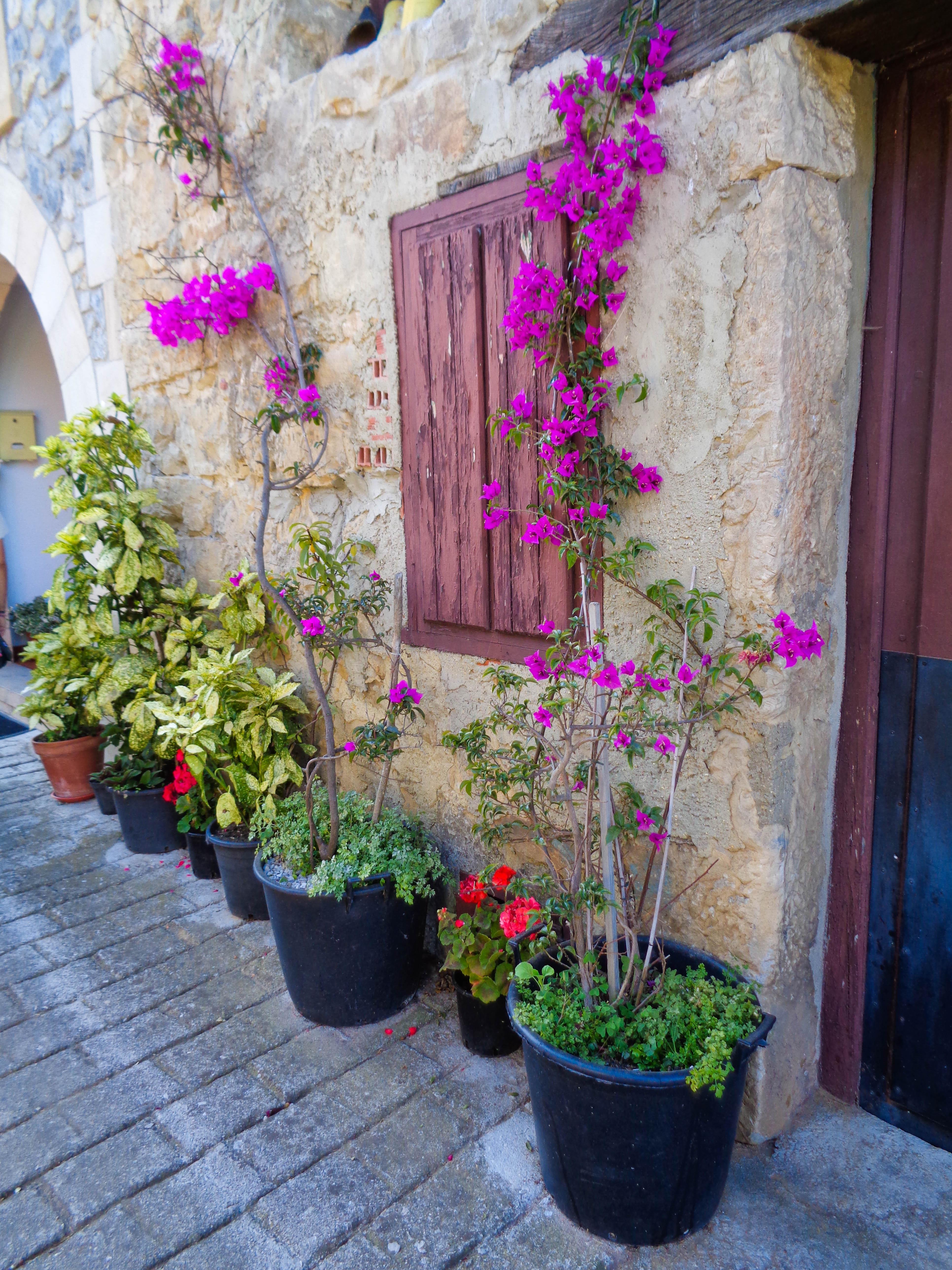 Pot plants, Buelna, Asturias