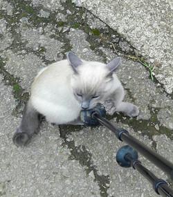 Kitten play time