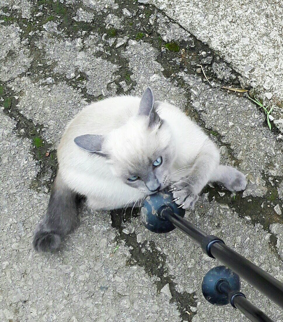 Walking poles are the best toy ever!