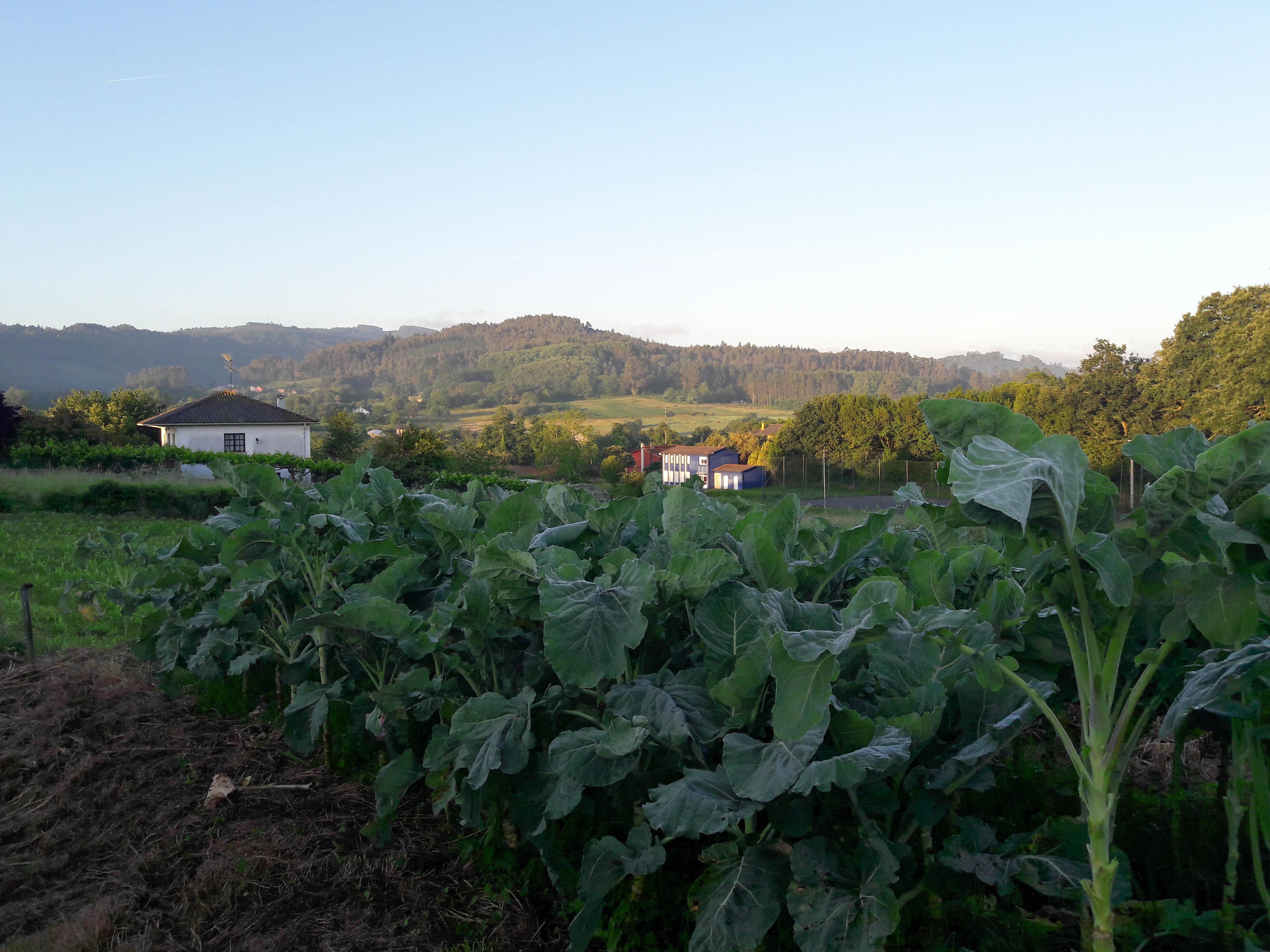 Sergude farms, Galicia