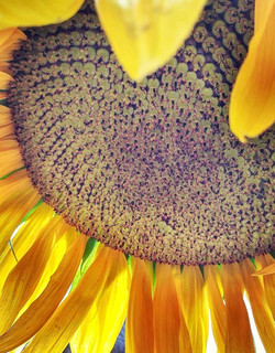 Day 356 - Sun 16th Aug