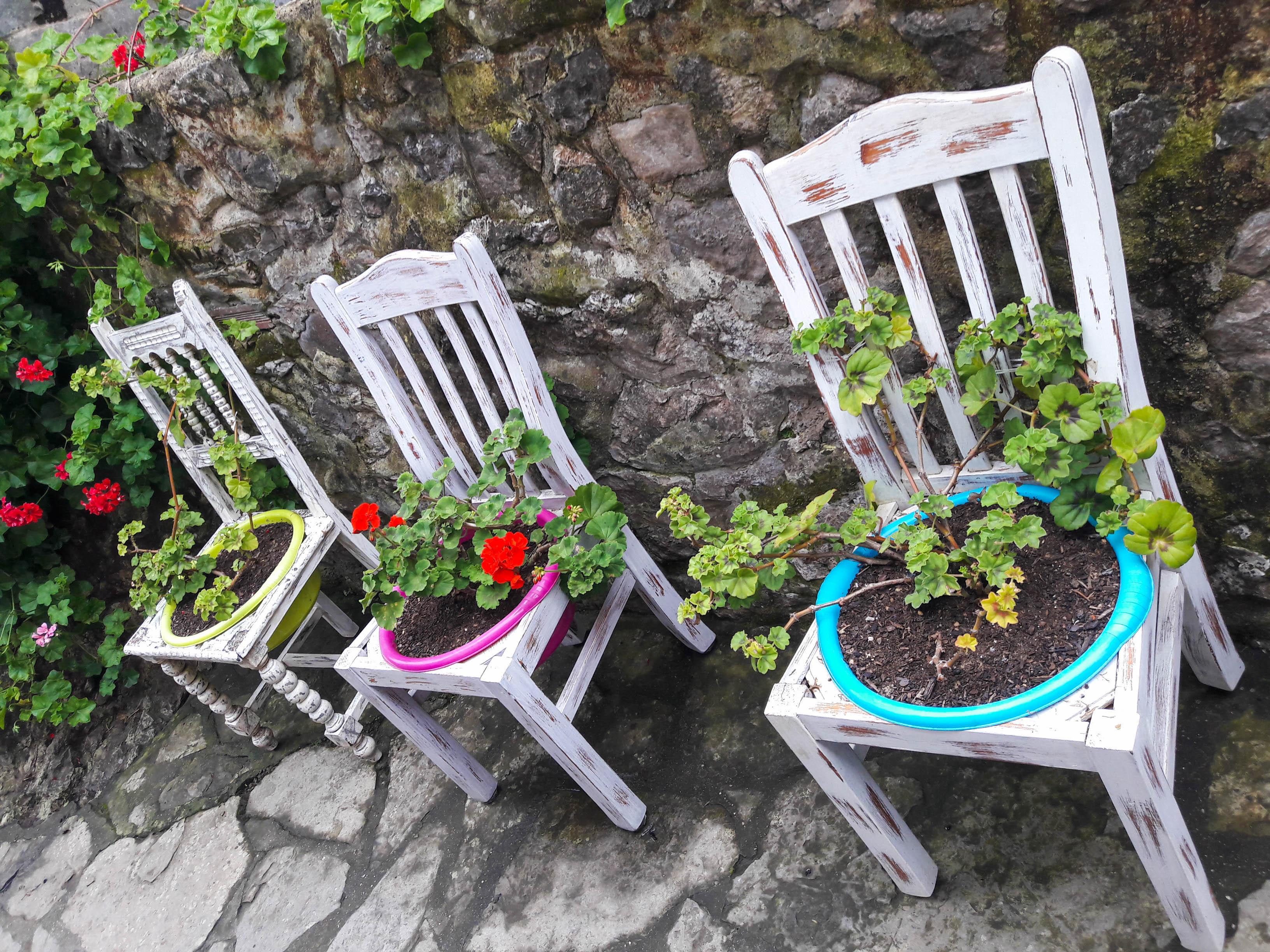 Arty gardening, Ribadesella